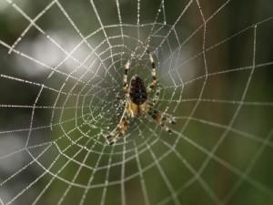 Angst vor Spinnen: Wohl eine der bekanntesten Phobien