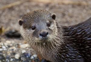 Angst vor Ottern: Eine seltene Phobie, die es aber wirklich gibt.