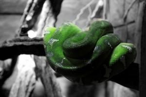 Für viele nachvollziehbar: Angst vor Schlangen