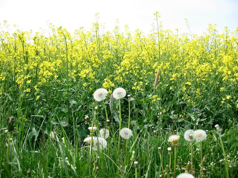 Heuschnupfen, Pollen-Zeit und Pollenflugkalender - apotheken-wissen.de
