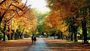 Herbstspaziergang - apotheken-wissen.de